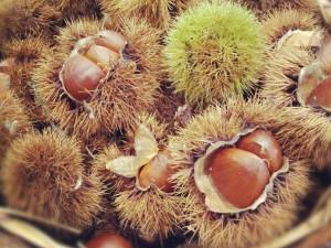 10/6(日) 青山フルーツパーラー2013 vol.4 ~All fruits you can eat!!~