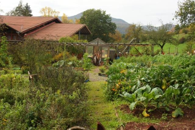 【講義】マーケットの畑プロジェクトが始動!食べたい畑、土かまど、バンブーハウスを作る