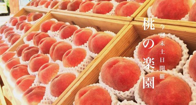 満員御礼!果物食べ比べイベント開催!