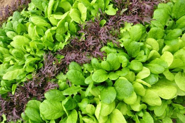 【Report】圧倒的な鮮度が、美味しさにつながる。東京・Ome Farm