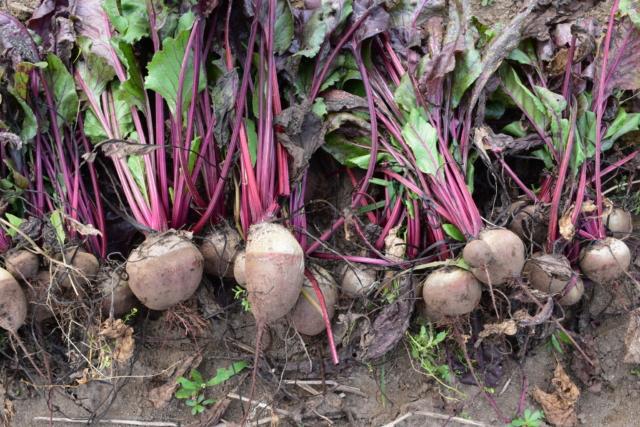 「生ごみが野菜になって家庭に還る」循環型のCSAの運用をスタートします