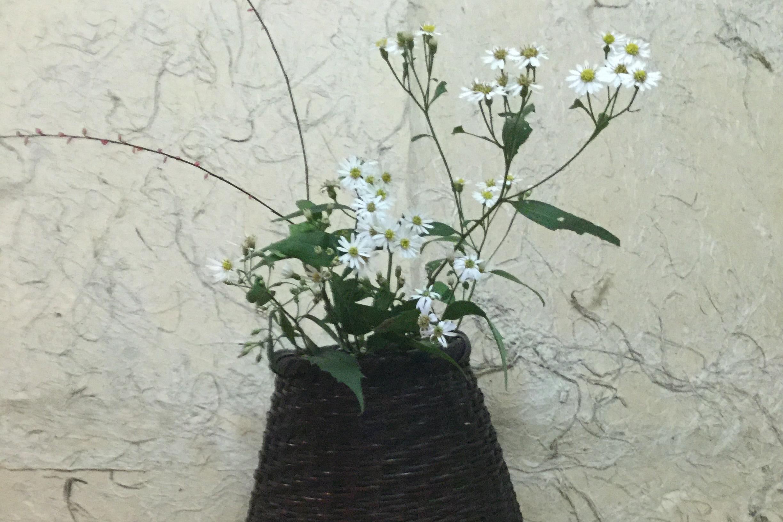 埼玉 / 山野花(やまのはな)
